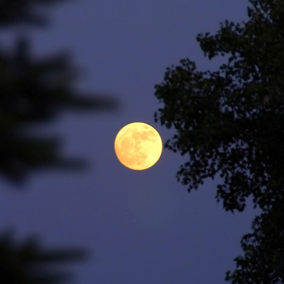 Full, yellow moon in June